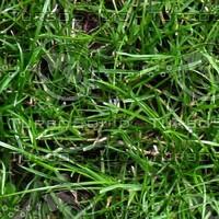 grass_004_3456x2304_tileable.jpg