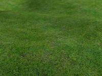 Tileable Grass - 2248x1921