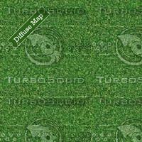 Grass Texture #10