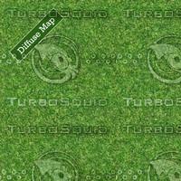 Grass Texture #11