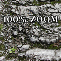 High resolution Rocky ground with moss and grass + Bump Map