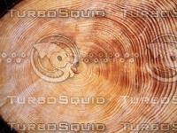tree_trunk_rings.jpg