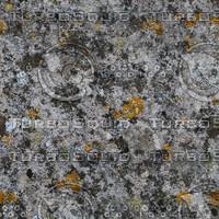 lichen wall 3.jpg