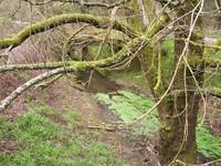 willowriver.jpg