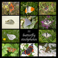 11-butterfly-photos.zip