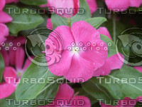 DT CR Flower.jpg