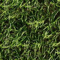 Grass007