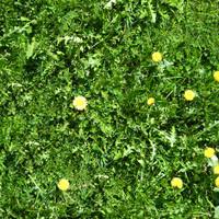 Grass010