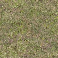Grass018