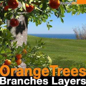 Orange Trees Branches Layers