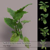 Plant_17