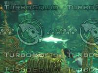 SharkInAquarium_1.jpg