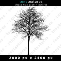 Tree Silhouette 002 - High Res