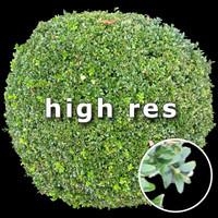 Bush 001 - top view (HighRes)