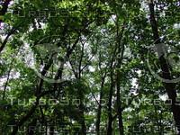 Woods_2.JPG