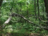 Woods_3.JPG