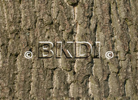 bark_oak_01.psd