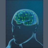 brain-man-ts.tif