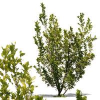 bush13