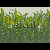 Corn_01.zip