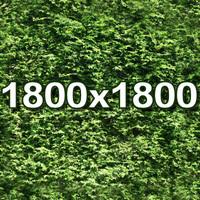 Hedge 001