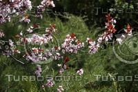 poetry of spring.jpg