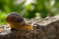 snail003.bmp