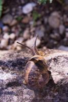 snail006.bmp