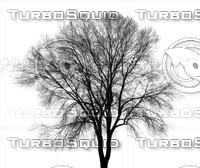 tree_lightmap.JPG