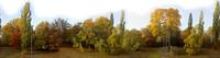 Autumn treeline