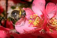 Bumblebee-2.bmp