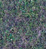 Grass003