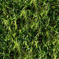 Grass005