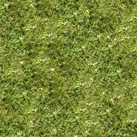 Grass011