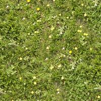 Grass012