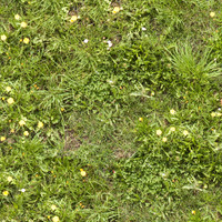 Grass013
