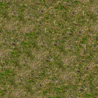 Grass021