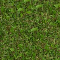 Grass026