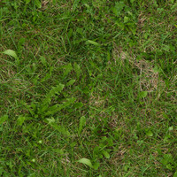 Grass028