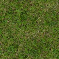 Grass034