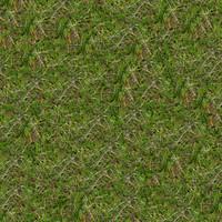 Grass035