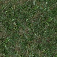 Grass039