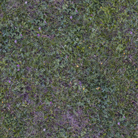Grass044