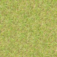 Grass051