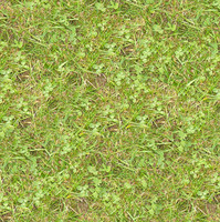 Grass052