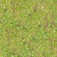 Grass055