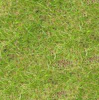 Grass062