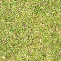 Grass063
