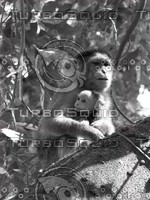 Monkey_12.jpg