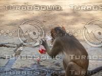 Monkey_18.jpg